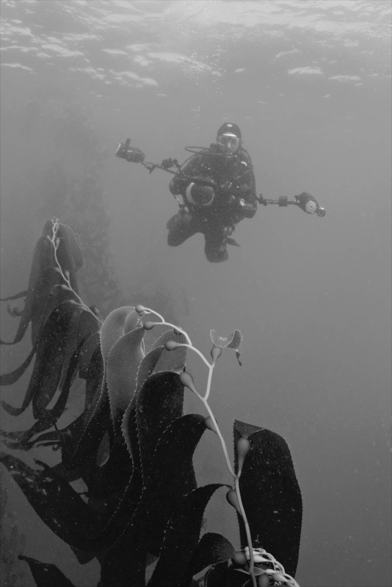 Ellenbogen on a previous assignment within the Kelp Forests off the coast of Monterey, CA. (Photo Courtesy of Keith Ellenbogen)